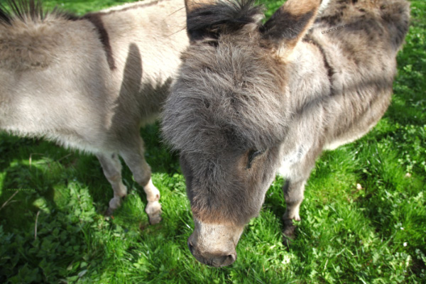 donkeys are rather special