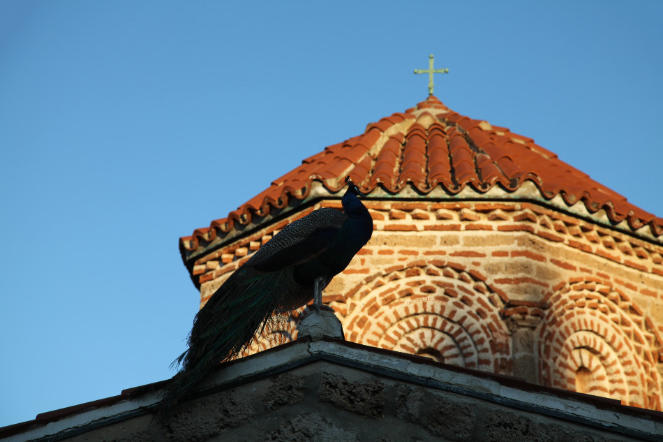 Peacock atop roof of Church in Monastery of Saint Naum in Ohrid Macedonia