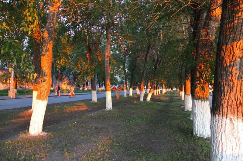 trees on the embankment at sunset